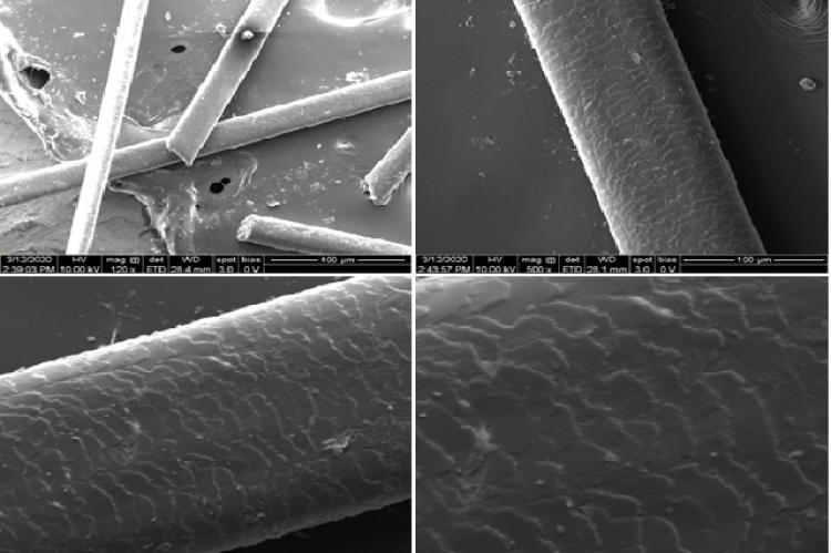 FESEM images of raw hair (from top left ): Surface morphology of non-extracted hair shaft at (a) 400 μm (b) 100 μm (c) 50 μm (d) 20 μm