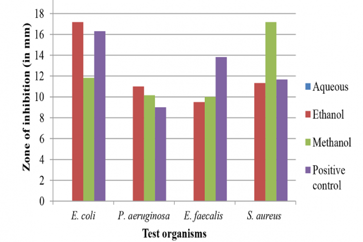 Mean zone of inhibition of crude leaf extracts of P. betle against E. coli, E. faecalis, S. aureus and P. aeruginosa.