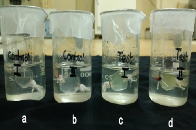Inhibition of Glucose Diffusion Assay a, b - Control, c – leaf extract (500 μg/ml), d – leaf extract (1000 μg/ml)