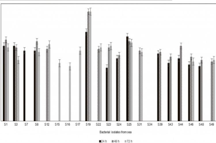 Hydrolytic capacity of sea isolates after 24, 48 and 72 h incubation at 30ºC