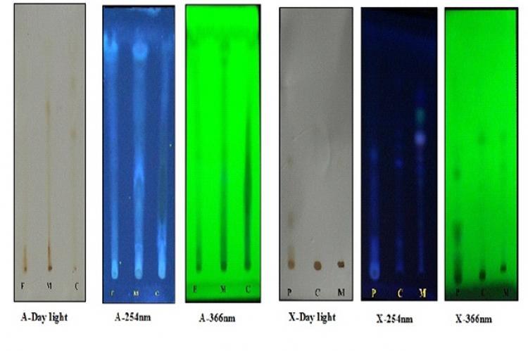 TLC Finger print profile of Tetrastigma angustifolia under 254 nm (A-254 & X-254) and 366 nm (A-366 & X-366)