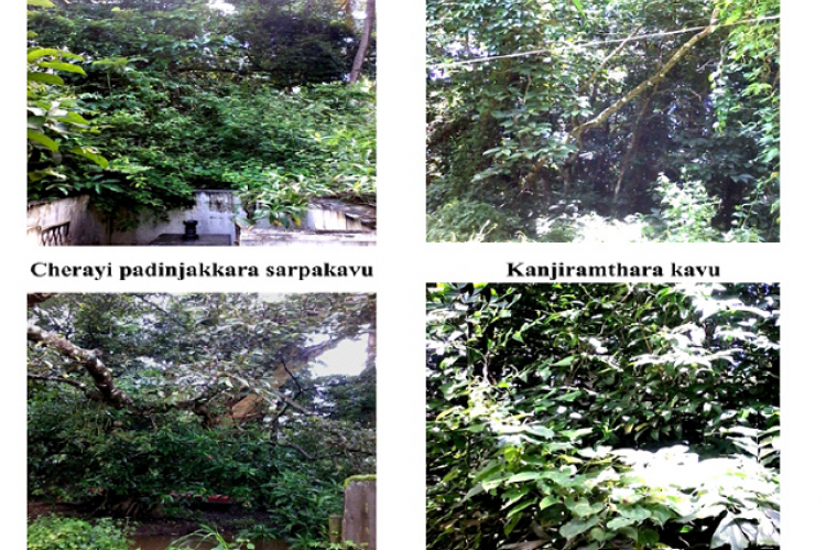 Rare, endemic and medicinal plants of selected sacred groves in  Chavakkad