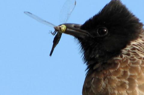 Rice field, NRRI